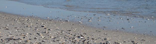 shells on the beach at the edge of the ocean's waters