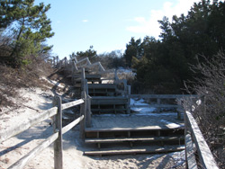 steps leading up from the Barnegat maritime forest
